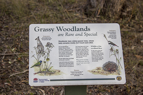 Signs explaining woodland features - Lake Inverell