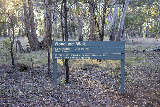 Woodland Walk - Barayamal National Park - Inverell